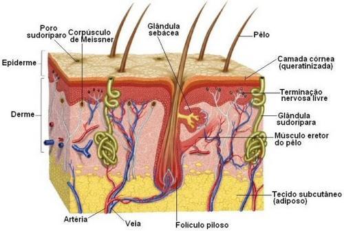 Os ciclos de crescimento do cabelo 🧐