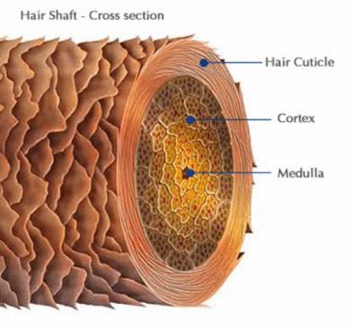 Do que é constituído o fio de cabelo ?